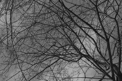 Schwarze Bäume unter dem grauen bewölkten Himmel lizenzfreies stockfoto