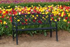 Schwarze Bank mit Tulpen Stockfotografie