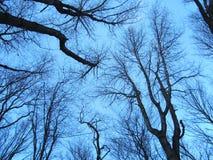Schwarze Baumaste auf Himmelhintergrund Stockbild