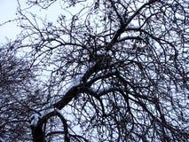 Schwarze Baumaste mit Schnee auf Himmelhintergrund Lizenzfreies Stockfoto