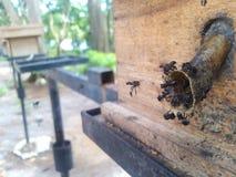 Schwarze Biene lizenzfreie stockfotografie