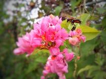 Schwarze Biene lizenzfreie stockbilder