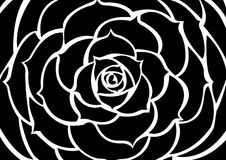 Schwarze Blume Stockfoto