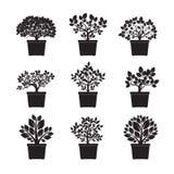 Schwarze Blumen und Topf Auch im corel abgehobenen Betrag Stockbilder