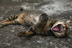 Schwarze braune lokale Katze legt sich auf dem Boden zu Hause hin Lizenzfreie Stockfotos