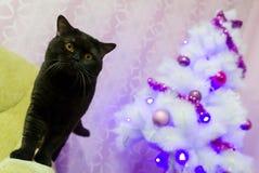 Schwarze britische Katze nahe einem Baum der weißen Weihnacht Lizenzfreie Stockfotografie