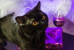 Schwarze britische Katze nahe einem Baum der weißen Weihnacht Stockbilder