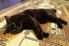 Schwarze britische Katze schläft auf Boden Stockfotografie