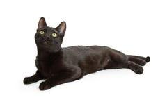 Schwarze Cat Lying Looking Up auf Weiß Stockbilder