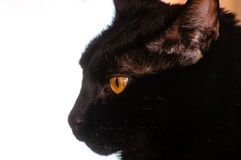Schwarze Cat Profile Portrait Lizenzfreies Stockfoto