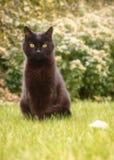Schwarze Cat Sat mit dem Blumenblatt Stockfoto