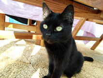 Schwarze Cat Under Table lizenzfreie stockbilder