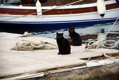 Schwarze Doppelkatzen auf einem Pier lizenzfreies stockfoto