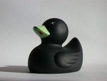 Schwarze Ente Stockfotos