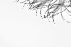 Schwarze Federn auf dem weißen Hintergrund stockfotografie