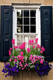 Schwarze Fenster-Fensterläden mit blühenden Blumen Stockfotos