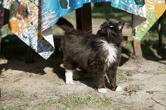 Schwarze flaumige Katze Lizenzfreie Stockfotografie