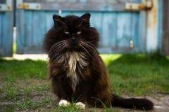 Schwarze flaumige Katze Stockbilder