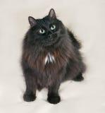 Schwarze flaumige Katze, die auf Gelb sitzt Stockbild