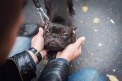 Schwarze franz?sische Bulldogge mit einem Kragen lizenzfreies stockfoto