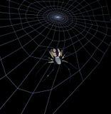 Schwarze gelbe Garten-Spinne auf Web - enthält Ausschnittspfad Lizenzfreies Stockfoto