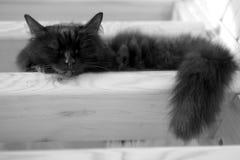 Schwarze Hauskatze, die auf Schritten der hölzernen Treppe innerhalb des Hauses schläft Lizenzfreie Stockfotos