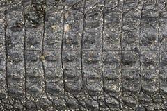 Schwarze Hautbeschaffenheit des Krokodils Lizenzfreies Stockbild
