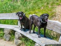 Schwarze Hunde Labrador retrievers legen auf eine Holzbank in den Bergen Lizenzfreies Stockbild