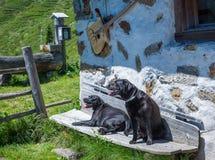 Schwarze Hunde Labrador retrievers legen auf eine Holzbank in den Bergen Lizenzfreie Stockfotografie