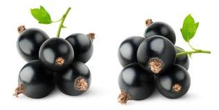 Schwarze Johannisbeeren Lizenzfreies Stockfoto