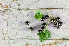 Schwarze Johannisbeeren mit Blättern auf der blauen Bank Stockfoto
