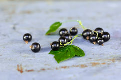 Schwarze Johannisbeeren mit Blättern auf der blauen Bank Lizenzfreie Stockfotos
