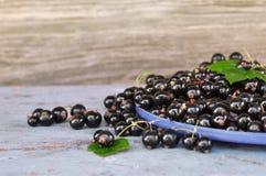 Schwarze Johannisbeeren mit grünen Blättern auf der blauen Bank Stockfotografie