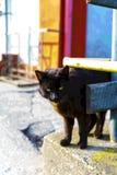 Schwarze junge Katze wartet begeistert auf den geliebten Meister Lizenzfreies Stockfoto