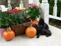 Schwarze Kätzchen Lizenzfreie Stockfotos