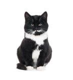 Schwarze Kätzchenkatze Lizenzfreies Stockfoto