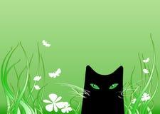 Schwarze Katze Lizenzfreie Stockfotos