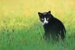 Schwarze Katze Stockbild
