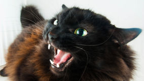Schwarze Katze Lizenzfreies Stockbild