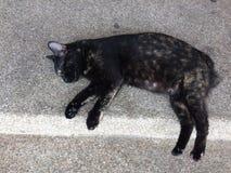 Schwarze Katze Stockfotos