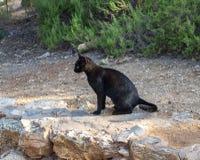 Schwarze Katze Lizenzfreie Stockbilder