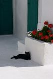 Schwarze Katze auf dem Fußboden Lizenzfreies Stockbild