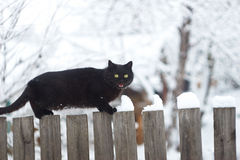 Schwarze Katze auf dem Winterhintergrund stockfotografie