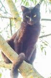 Schwarze Katze auf einem Baumast Stockbild