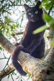 Schwarze Katze auf einem Baumast Stockbilder