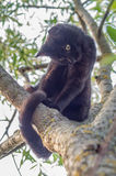 Schwarze Katze auf einem Baumast Lizenzfreie Stockfotografie