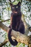 Schwarze Katze auf einem Baumast Stockfotos