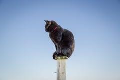 Schwarze Katze auf einem Beitrag gegen einen blauen Himmel Lizenzfreie Stockfotos