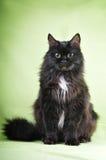 Schwarze Katze auf einem grünen Mantel Stockbild