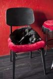 Schwarze Katze auf einem roten Stuhl Lizenzfreies Stockfoto